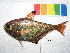 (Pempheridae - MAL-024)  @15 [ ] CreativeCommons - Attribution Non-Commercial Share-Alike (2012) SAIAB SAIAB