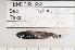 (Lampanyctus pusillus - 08-079)  @12 [ ] Unspecified (default): All Rights Reserved  Unspecified Unspecified
