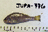 (Genyonemus - JUPA-776)  @14 [ ] CreativeCommons - Attribution Share-Alike (2014) Unspecified Menifee Valley Campus