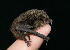 (Myotis siligorensis - ZMMU SVK 11-065)  @14 [ ] Copyright (2012) Sergei Kruskop Zoological Museum of Moscow University