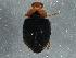 (Scymnus rubromaculatus - BIOUG05672-A09)  @13 [ ] CreativeCommons - Attribution Non-Commercial Share-Alike (2013) BIO Photography Group Biodiversity Institute of Ontario