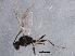 (Diaeretiella - BIOUG05554-G02)  @12 [ ] CreativeCommons - Attribution Non-Commercial Share-Alike (2013) BIO Photography Group Biodiversity Institute of Ontario