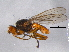 (Heleomyzidae - BIOUG05502-D02)  @11 [ ] CreativeCommons - Attribution Non-Commercial Share-Alike (2012) BIO Photography Group Biodiversity Institute of Ontario