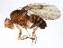 (Drosophila rellima - BIOUG16148-F04)  @15 [ ] CreativeCommons - Attribution Non-Commercial Share-Alike (2014) BIO Photography Group Biodiversity Institute of Ontario