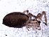 (cfTasata_IM - MAI 4168-1496)  @11 [ ] CreativeCommons – Attribution Non-Commercial Share-Alike (2013) Matías A. Izquierdo Museo Argentino de Ciencias Naturales