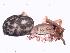 (Anisacate - MAI 4151-1514)  @11 [ ] CreativeCommons – Attribution Non-Commercial Share-Alike (2013) Matías A. Izquierdo Museo Argentino de Ciencias Naturales