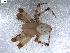 (Araneus trifolium - BIOUG00512-H05)  @14 [ ] Copyright  G. Blagoev 2010 Unspecified