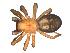 (Callobius severus - BIOUG00521-D02)  @14 [ ] Copyright  G. Blagoev 2010 Unspecified