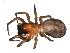 (Callobius bennetti - BIOUG00521-D11)  @14 [ ] Copyright  G. Blagoev 2010 Unspecified