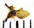 (Uloboridae - STEP-331)  @13 [ ] Unspecified (default): All Rights Reserved  Unspecified Unspecified