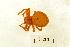 (Araneus alsine - BIOUG00161-B02)  @13 [ ] Copyright  G. Blagoev 2010 Unspecified