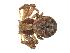 (Xysticus rugosus - BIOUG01890-F01)  @13 [ ] Copyright  G. Blagoev 2011 Unspecified
