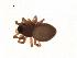 (Ceraticelus bulbosus - BIOUG00604-H09)  @14 [ ] Copyright  G. Blagoev 2010 Unspecified