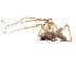 (Cheiracanthium mildei - BIOUG00889-F08)  @14 [ ] Copyright  G. Blagoev 2012 Unspecified