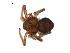 (Ebo - BIOUG12605-C11)  @12 [ ] CreativeCommons – Attribution Non-Commercial Share-Alike (2014) G. Blagoev Biodiversity Institute of Ontario