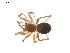 (Improphantes - BIOUG01973-D07)  @13 [ ] Copyright  G. Blagoev 2012 Unspecified