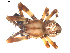 (Araneus groenlandicola - BIOUG00627-G04)  @14 [ ] Copyright  G. Blagoev 2010 Unspecified