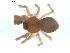 (Gonatium crassipalpum - BIOUG00628-A07)  @13 [ ] Copyright  G. Blagoev 2010 Unspecified