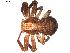 (Xysticus obscurus - BIOUG00628-G02)  @14 [ ] Copyright  G. Blagoev 2010 Unspecified