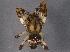 (Araneus sp. 1GAB - BIOUG06154-D02)  @14 [ ] CreativeCommons - Attribution Non-Commercial Share-Alike (2014) BIO Photography Group Biodiversity Institute of Ontario