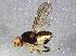 (Psilacrum - BIOUG05094-D12)  @14 [ ] CreativeCommons - Attribution Non-Commercial Share-Alike (2014) Biodiversity Institute of Ontario Biodiversity Institute of Ontario
