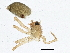 (Diplocentria perplexa - BIOUG05290-H05)  @12 [ ] CreativeCommons - Attribution Non-Commercial Share-Alike (2014) BIO Photography Group Biodiversity Institute of Ontario