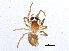(Dictyna sp. 1GAB - BIOUG04990-A12)  @13 [ ] CreativeCommons - Attribution Non-Commercial Share-Alike (2014) BIO Photography Group Biodiversity Institute of Ontario