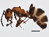 (Formica dakotensis - BIOUG05011-E09)  @13 [ ] CreativeCommons - Attribution Non-Commercial Share-Alike (2014) BIO Photography Group Biodiversity Institute of Ontario