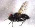 (Imitomyia - BIOUG05431-C12)  @13 [ ] CreativeCommons - Attribution Non-Commercial Share-Alike (2014) BIO Photography Group Biodiversity Institute of Ontario