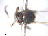 (Simulium siamense - BIOUG01778-D05)  @11 [ ] CreativeCommons - Attribution Non-Commercial Share-Alike (2012) BIO Photography Group Biodiversity Institute of Ontario