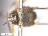 (Simulium nr. inthanonense - BIOUG01778-F09)  @11 [ ] CreativeCommons - Attribution Non-Commercial Share-Alike (2012) BIO Photography Group Biodiversity Institute of Ontario