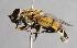 ( - CNC Diptera 224939)  @15 [ ] CC BY-NC-SA (2014) Jeffrey H. Skevington Agriculture and Agri-Food Canada