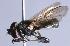 (Lejota - CNC Diptera 226834)  @14 [ ] CC BY-NC-SA (2085) Jeffrey H. Skevington Agriculture and Agri-Food Canada