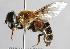 (Eristalis vitripennis - Jeff Skevington Specimen 30001)  @11 [ ] CC BY-NC-SA (2233) Jeffrey H. Skevington Agriculture and Agri-Food Canada