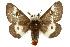 (Hemileuca maia maia - TAMUICEGR-0797)  @15 [ ] CreativeCommons - Attribution Non-Commercial Share-Alike (2010) Biodiversity Institute of Ontario 2010 Biodiversity Institute of Ontario