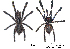 (Poecilotheria rufilata - BIOGU00532-F01)  @14 [ ] CreativeCommons – Attribution (by) (2013) Michael Morra Biodiversity Institute of Ontario