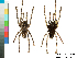 (Poecilotheria striata - BIOGU00533-A11)  @14 [ ] CreativeCommons – Attribution (by) (2013) Michael Morra Biodiversity Institute of Ontario