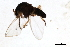 (Simulium rudnicki - SIM-CANADA-610)  @13 [ ] CreativeCommons - Attribution Non-Commercial Share-Alike (2009) Unspecified Biodiversity Institute of Ontario
