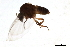 (Simulium feuerborni - SIM-CANADA-612)  @13 [ ] CreativeCommons - Attribution Non-Commercial Share-Alike (2009) Unspecified Biodiversity Institute of Ontario