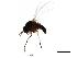 (Simulium decuplum - SIM-CANADA-613)  @12 [ ] CreativeCommons - Attribution Non-Commercial Share-Alike (2009) Unspecified Biodiversity Institute of Ontario