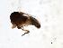 (Simulium aureohirtum - SIM-CANADA-623)  @12 [ ] CreativeCommons - Attribution Non-Commercial Share-Alike (2009) Unspecified Biodiversity Institute of Ontario