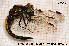 ( - TRD-ODO21)  @11 [ ] Creative Commons – Attribution Non-Commercial Share-Alike (2014) NTNU University Museum, Department of Natural History NTNU University Museum, Department of Natural History