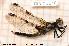 ( - TRD-ODO46)  @11 [ ] Creative Commons – Attribution Non-Commercial Share-Alike (2014) NTNU University Museum, Department of Natural History NTNU University Museum, Department of Natural History