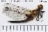 ( - TRD-ODO75)  @11 [ ] Creative Commons – Attribution Non-Commercial Share-Alike (2014) NTNU University Museum, Department of Natural History NTNU University Museum, Department of Natural History