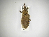 (Rhodnius - INBIOCRI001335859)  @11 [ ] CreativeCommons - Attribution Non-Commercial Share-Alike (2012) Carlos Hernandez Biodiversity Institute of Ontario