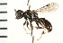  (Crossocerus lentus - LP00403)  @11 [ ] CreativeCommons - Attribution Non-Commercial Share-Alike (2009) Unspecified Biodiversity Institute of Ontario