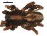 ( - 01-KADIR-D03)  @13 [ ] CreativeCommons - Attribution Non-Commercial Share-Alike  Gergin Blagoev, Biodiversity Intitute of Ontario Biodiversity Institute of Ontario