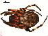 ( - 02-KADIR-F05)  @13 [ ] CreativeCommons - Attribution Non-Commercial Share-Alike  Gergin Blagoev, Biodiversity Intitute of Ontario Biodiversity Institute of Ontario