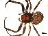 ( - 03-KADIR-H11)  @12 [ ] CreativeCommons - Attribution Non-Commercial Share-Alike  Gergin Blagoev, Biodiversity Intitute of Ontario Biodiversity Institute of Ontario