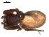 (Palpimanidae - 05-KADIR-D11)  @12 [ ] CreativeCommons - Attribution Non-Commercial Share-Alike (2010) Gergin Blagoev, Biodiversity Intitute of Ontario Biodiversity Institute of Ontario